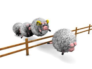 Pecore con staccionata