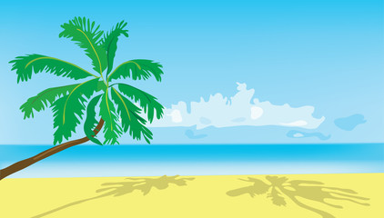 Background. Summer. A green palm tree on a beach.
