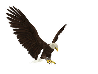 Fototapete - american bald eagle hunting different angle