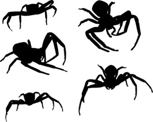 five spider silhouettes on white