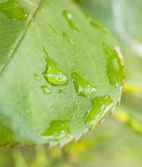 Gotas de lluvia sobre hoja verde