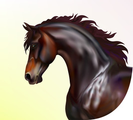 Vector photo realistic horse portrait