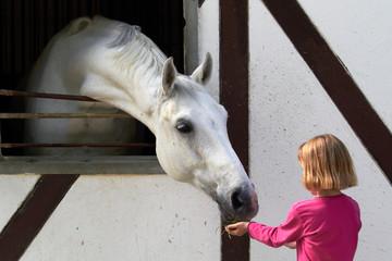 KInd füttert Pferd