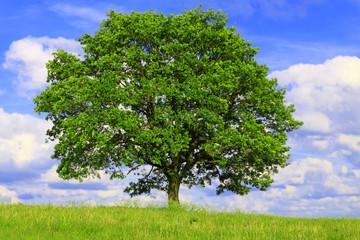 Poster Trees Der Baum