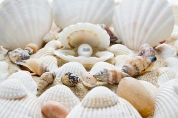 sea pearl in shells