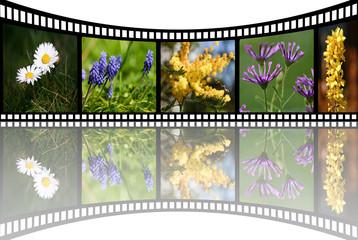 fleurs en perspective