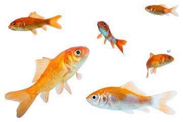 Bilder und videos suchen teichfische for Fische naturteich