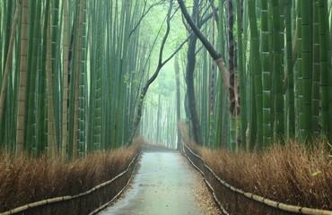 Garden Poster Road in forest 竹林の小道