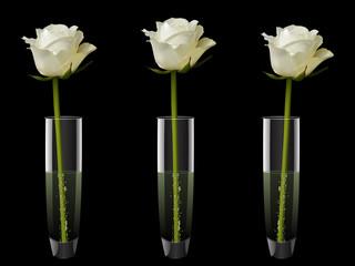 white roses in vases