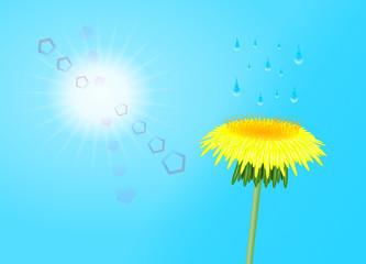 Fototapeta kwiat mleczu obraz