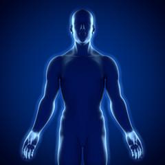 Männlicher Oberkörper – Silhouette mit einer Lichtkante