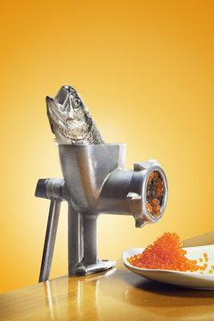 A trout in a mincing machine