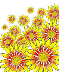 beautiful yellow Sunflower . drawing