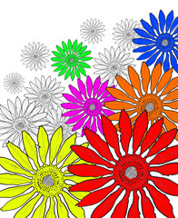 beautiful flower . drawing