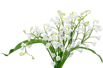 Wall Murals Lily of the valley May Lily