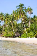 Tropical beach with palm trees on the sand near the sea