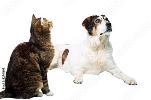 gestreifte katze und braun weisser hund vor weissem hintergrund stockfotos und lizenzfreie. Black Bedroom Furniture Sets. Home Design Ideas
