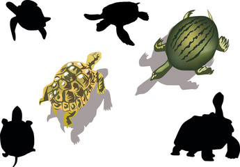 set of turtles isolated on white
