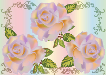 three beautiful light rose flower design
