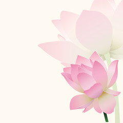 Lotus background