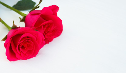 Two pink roses on light background