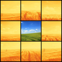 agriculture corn field pictures