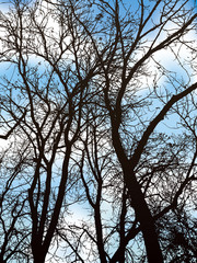 Spreading branches