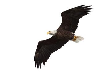 Garden Poster Eagle spread wing bald eagle soars across the sky