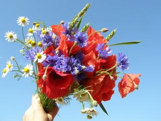 Obraz Kwiaty polskie - fototapety do salonu