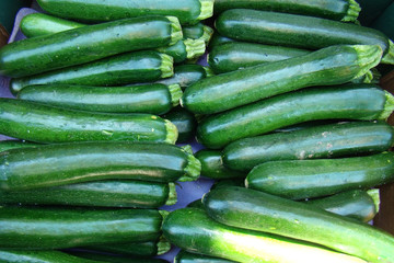 Fresh Zucchini at farmers market