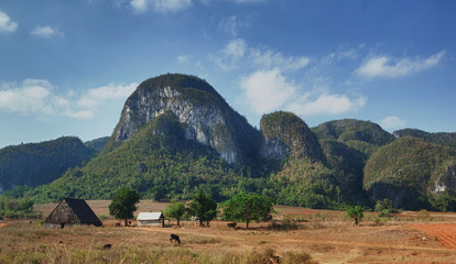 The Vinales Valley, Cuba