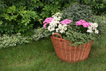 Flowers in the garden planted in a basket