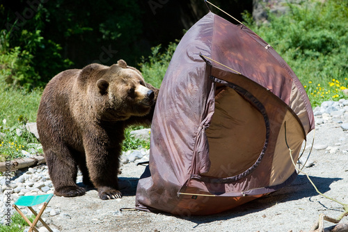 Bear destroying a raft  Stock photo and royalty-free images on Fotolia.com - Pic 32905969 & Bear destroying a raft