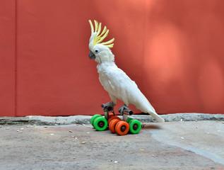 Parrot on rolls
