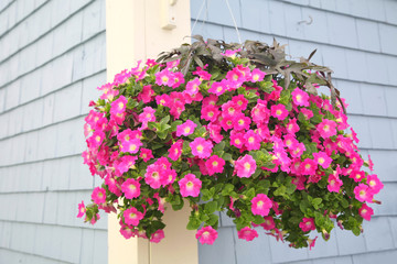 Petunia Basket