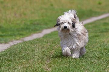 Hund beim Gassi gehen/Freilauf