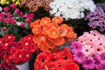 Variety of colourful bouquets of flowers