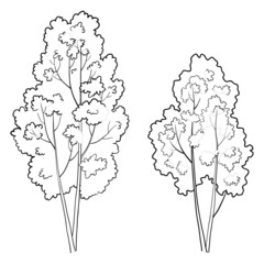 Trees deciduous, outline