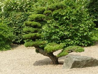 Fototapeta W ogrodzie japońskim obraz