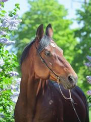 portrait of nice horse near flower