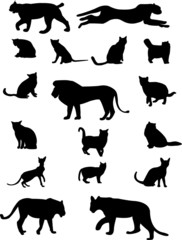 collection of cat family - vector