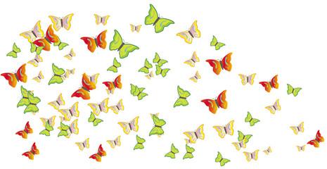 Butterflies swarm