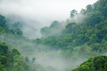 Poster de jardin Jungle rainforest morning fog