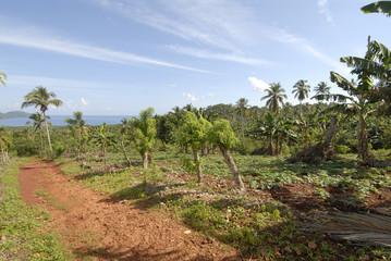 repubblica dominicana, penisola samana,