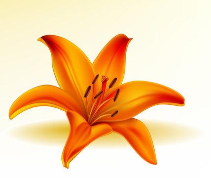 Vector photo-realistic orange lily