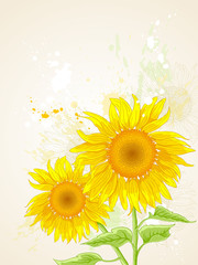 floral background with sunflower