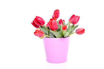 a bunch of red tulips in a pink vase isolated over white