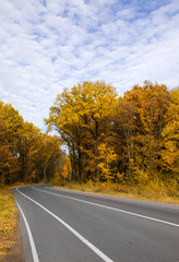 curving autumn road in forest