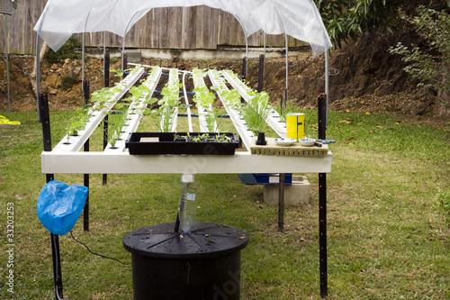 Table hydroponique photo libre de droits sur la banque d 39 images image 33203253 - Table hydroponique a vendre ...