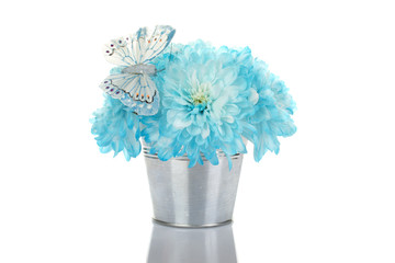Blue chrysanthemums in a pail